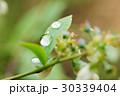 植物 葉 クローズアップの写真 30339404