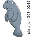 Cute cartoon manatee 30340244