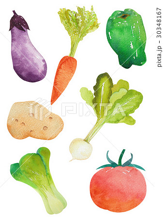 野菜 水彩 30348167