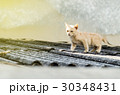 The kitten walking on the roof in the morning 30348431