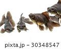 動物 アクアリウム 水族館の写真 30348547