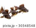動物 アクアリウム 水族館の写真 30348548