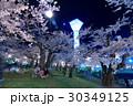 函館・五稜郭公園の夜桜<満開> 30349125