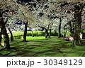 函館・五稜郭公園の夜桜<満開> 30349129