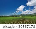 田畑 畑 風景の写真 30367178