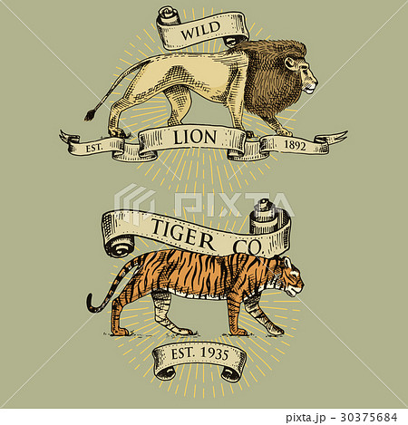 Lion and tiger logos, emblems or badges with wildのイラスト素材 [30375684] - PIXTA