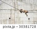 サルも木から落ちる 30381728