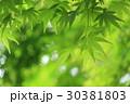 若葉 葉 新緑の写真 30381803