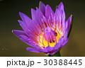 花 クローズアップ フラワーの写真 30388445