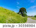 土手 晴れ 自然の写真 30398984