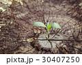 背景 エコ 生態の写真 30407250