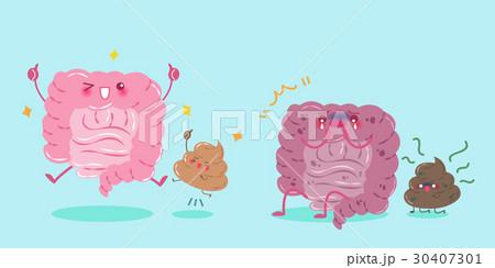 intestine with health concept 30407301