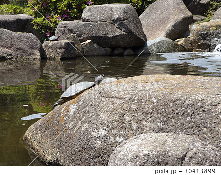 稲毛海浜公園の池に小さい滝と亀さん 30413899