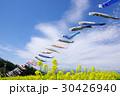 鯉のぼりと菜の花畑 30426940