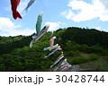 2017藤_白井大町藤公園 30428744