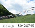 2017藤_白井大町藤公園 30428745