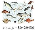魚介 魚 魚介類のイラスト 30429430
