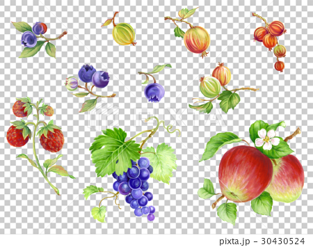 fruit, fruits, hand drawn 30430524