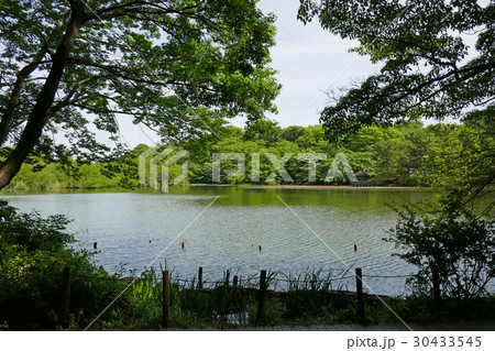 石神井公園の三宝寺池 30433545