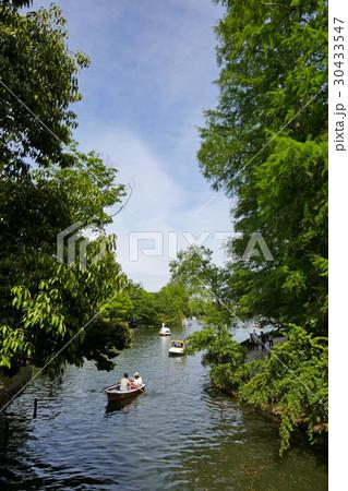 石神井公園ボート池の橋から見る新緑の風景 30433547