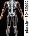 3Dイラスト 解剖学的 人体のイラスト 30435999