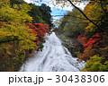 奥日光 湯滝 滝の写真 30438306
