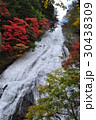 奥日光 湯滝 滝の写真 30438309