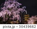 京都 東寺 夜桜の写真 30439662