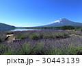 富士山 河口湖 ラベンダーの写真 30443139