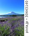 富士山 河口湖 ラベンダーの写真 30443140
