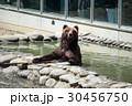 熊 くま クマの写真 30456750