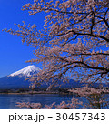 Cherry Blossoms and Mt.Fuji Kawaguchi Lake,square 30457343