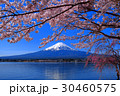 Cherry blossoms full bloom Mt. Fuji Lake Kawaguchi 30460575
