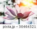 きれい 綺麗 花の写真 30464321