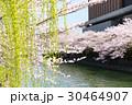 岡崎・桜回廊 30464907