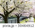 岡崎・桜回廊 30464912