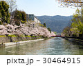 岡崎・桜回廊 30464915