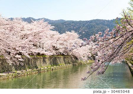 岡崎・桜回廊 30465048