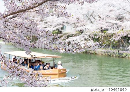 岡崎・桜回廊 30465049