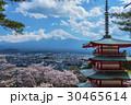 新倉山浅間公園 五重塔 桜の写真 30465614