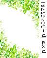新緑 葉 植物のイラスト 30465781