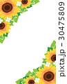 ベクター 花 向日葵のイラスト 30475809