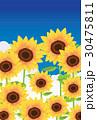 ベクター 花 向日葵のイラスト 30475811