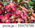 庭 庭園 ガーデンの写真 30479786