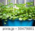 庭 庭園 ガーデンの写真 30479801