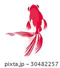 金魚 風物詩 魚のイラスト 30482257