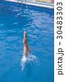 試合 ダイビング 人の写真 30483303