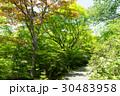 新緑 - 宝筐院 30483958
