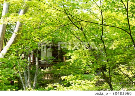 新緑 - 宝筐院 30483960