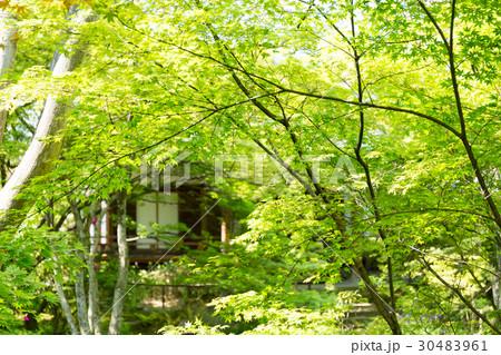 新緑 - 宝筐院 30483961